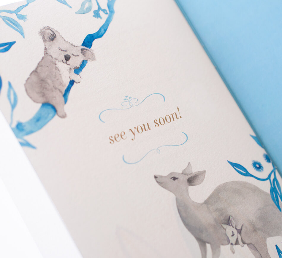 Kangaroo and koala bear illustrations